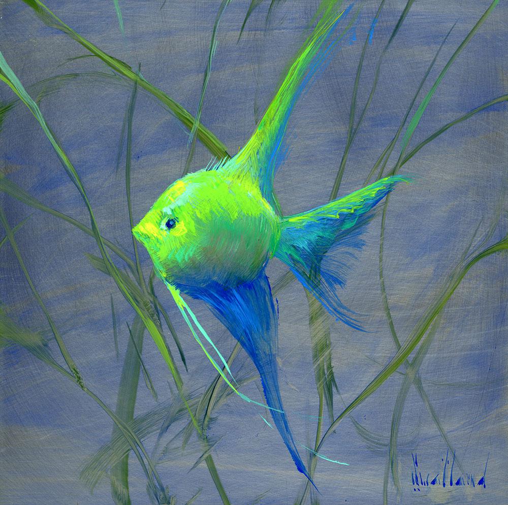 katie_swatland_ks1041_young_queen_angel_fish.jpg