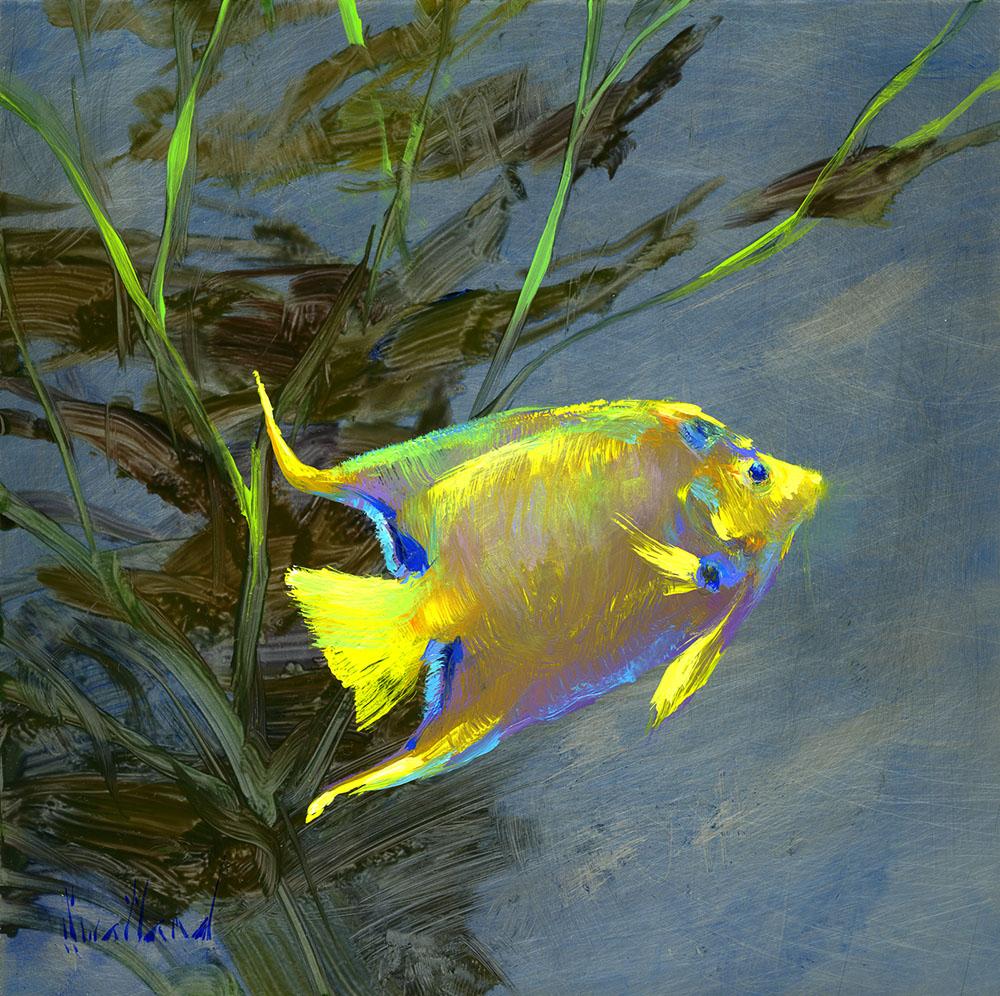 katie_swatland_ks1042_yellow_tipped_angel_fish.jpg