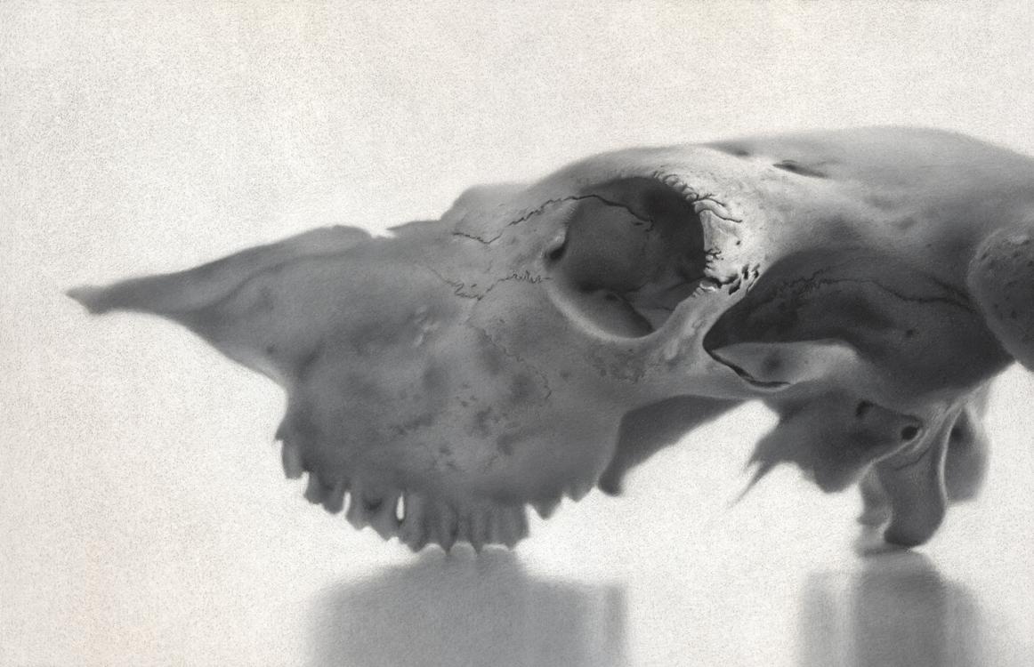 timothy_w_jahn_tj1002_study_skull.jpg
